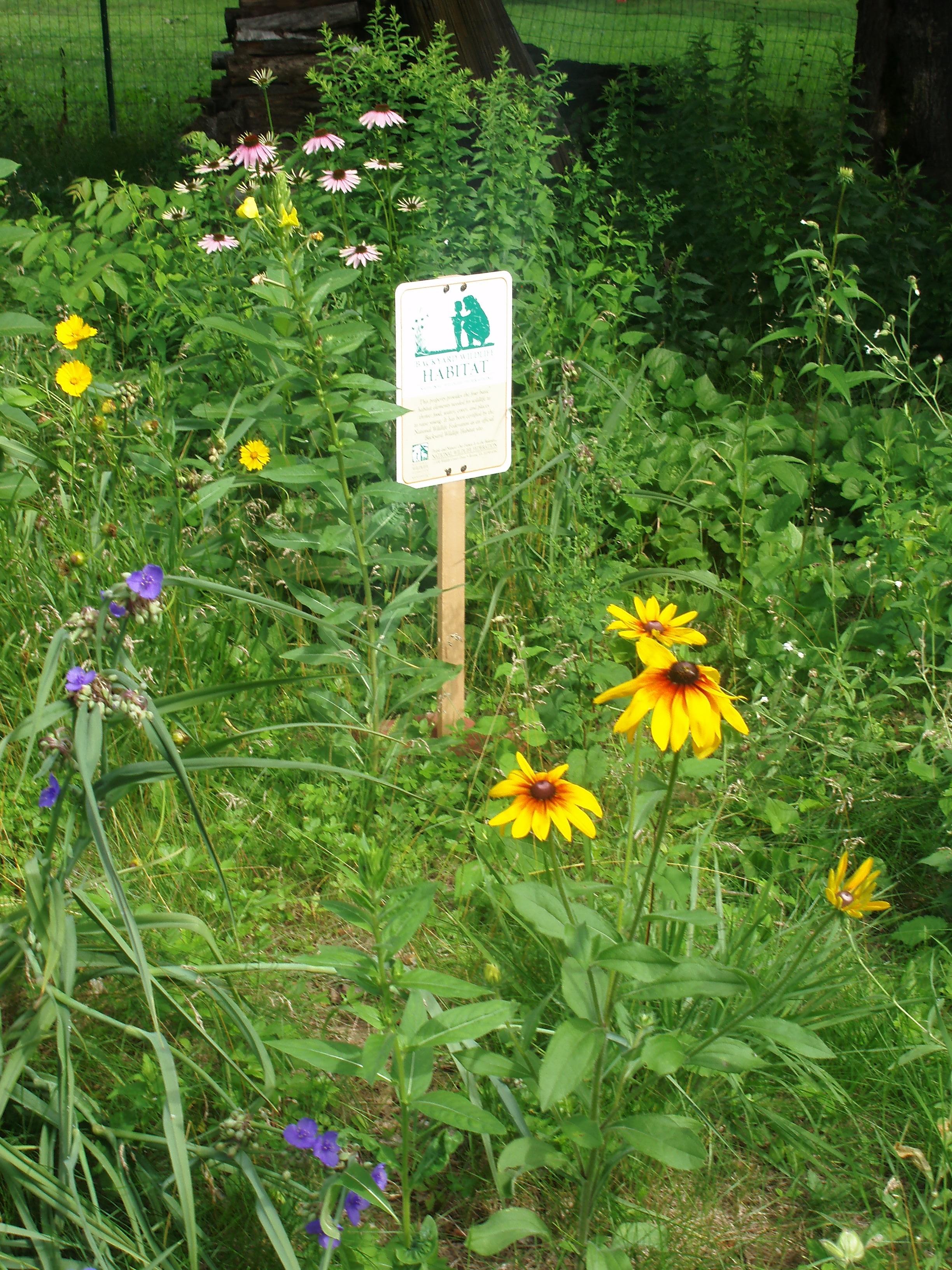 create your own backyard wildlife habitat crockett log u0026 timber
